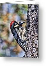 Female Acorn Woodpecker Portrait Greeting Card