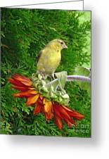 Female American Goldfinch Greeting Card