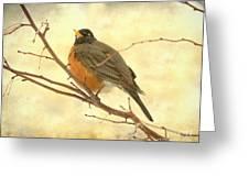 Female American Robin Greeting Card