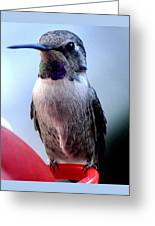 Female Anna With Purple Blue Throat Greeting Card
