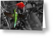 Female Anna's Hummingbird Greeting Card by Old Pueblo Photography