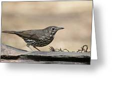 Female Blackbird Greeting Card