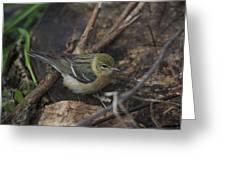 Female Cape May Warbler Greeting Card