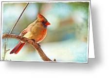 Female Cardinal - Digital Paint IIi Greeting Card