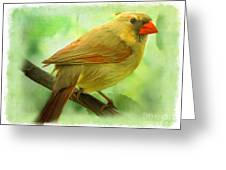 Female Cardinal In Elm Tree - Digital Paint Greeting Card