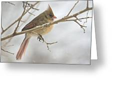 Female Cardinal In Snow 02 Greeting Card