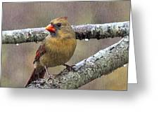 Female Cardinal Reigns In The Rain  Greeting Card