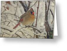 Female Cardinal In The Snow II Greeting Card