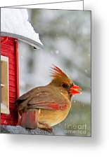 Female Cardinal In The Snow Greeting Card