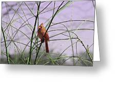 Female Cardinal In Willow Greeting Card
