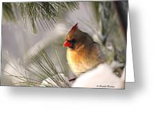 Female Cardinal Nestled In Snow Greeting Card