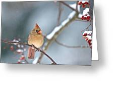 Female Cardinal On Cherry Tree In Snow Greeting Card