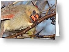 Thorns And Berries - Cardinal Greeting Card