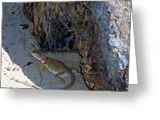 Female Collared Lizard Greeting Card