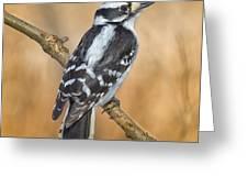 Female Downey Woodpecker Greeting Card