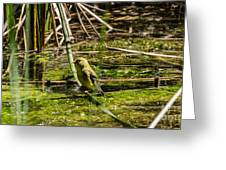 Female Gold Finch Drinking Greeting Card