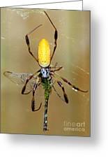 Female Golden Silk Spider Eating Greeting Card