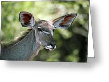 Female Greater Kudu Greeting Card