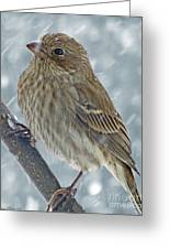 Female House Finch In Snow 1 Greeting Card
