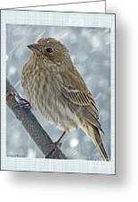 Female House Finch In Snow Greeting Card