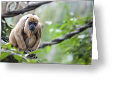 Female Howler Monkey Greeting Card