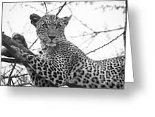 Female Leopard Greeting Card