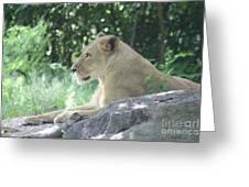 Female Lion On Guard Greeting Card