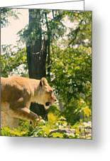 Female Lion On The Move Greeting Card