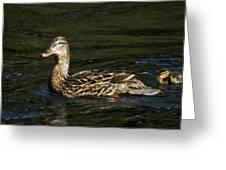 Female Mallard And Duckling Greeting Card