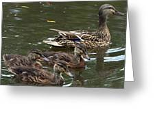 Female Mallard Duck And The Little Ones Greeting Card
