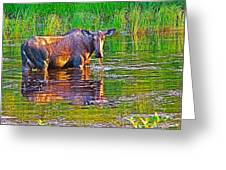 Female Moose Near Airport In Chicken-alaska   Greeting Card
