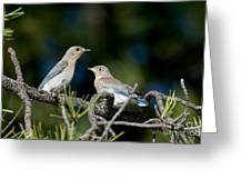 Female Mountain Bluebird With Fledgling Greeting Card