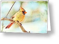 Female Northern Cardinal - Digital Paint I Greeting Card