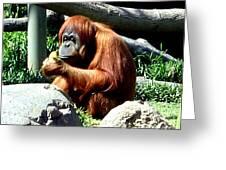 Female Orangutan-san Diego Greeting Card