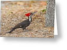 Female Pileated Woodpecker Greeting Card