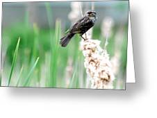 Female Red Winged Black Bird Greeting Card