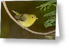 Female Scarlet Tanager Greeting Card