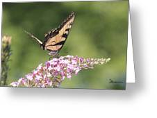 Female Tiger Butterly-1-featured In Macro-comfortable Art And Newbies Groups Greeting Card
