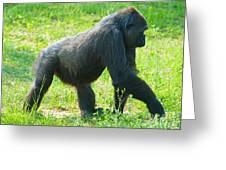 Female Western Lowland Gorilla Greeting Card