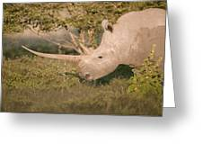 Female White Rhinoceros Grazing Greeting Card