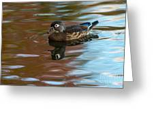 Female Wood Duck In Fall Colors Greeting Card