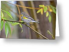 Female Yellow-rumped Warbler Greeting Card
