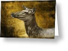 Female Yellowstone Elk Greeting Card