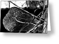 Fence And Barbed Wire Greeting Card