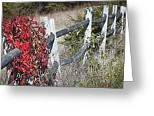 Fence And Creeper Greeting Card
