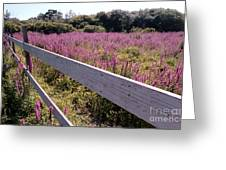 Fence And Purple Wild Flowers Greeting Card