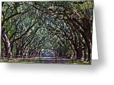 Fence And Wormsloe In Savannah  Greeting Card