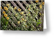 Fence Lined Wildflowers Greeting Card