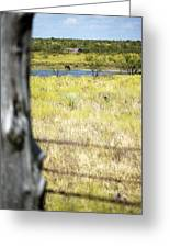 Fence Pasture Horse 14419 Greeting Card