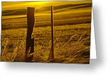 Fence Post In The Morning Light Greeting Card